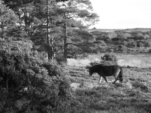 The New Forest 2